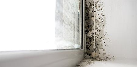 schimmel in huis voorkomen